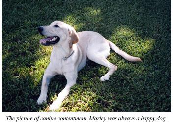 happy tears labrador
